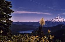 Mount Hood from Buck Peak