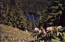 Buck Peak lake and wildflowers