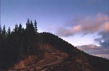 Tillamook forest cuts